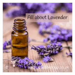 Lavender is a staple ingredient for both aromatherapy and wellbeing products and it's really no wonder.