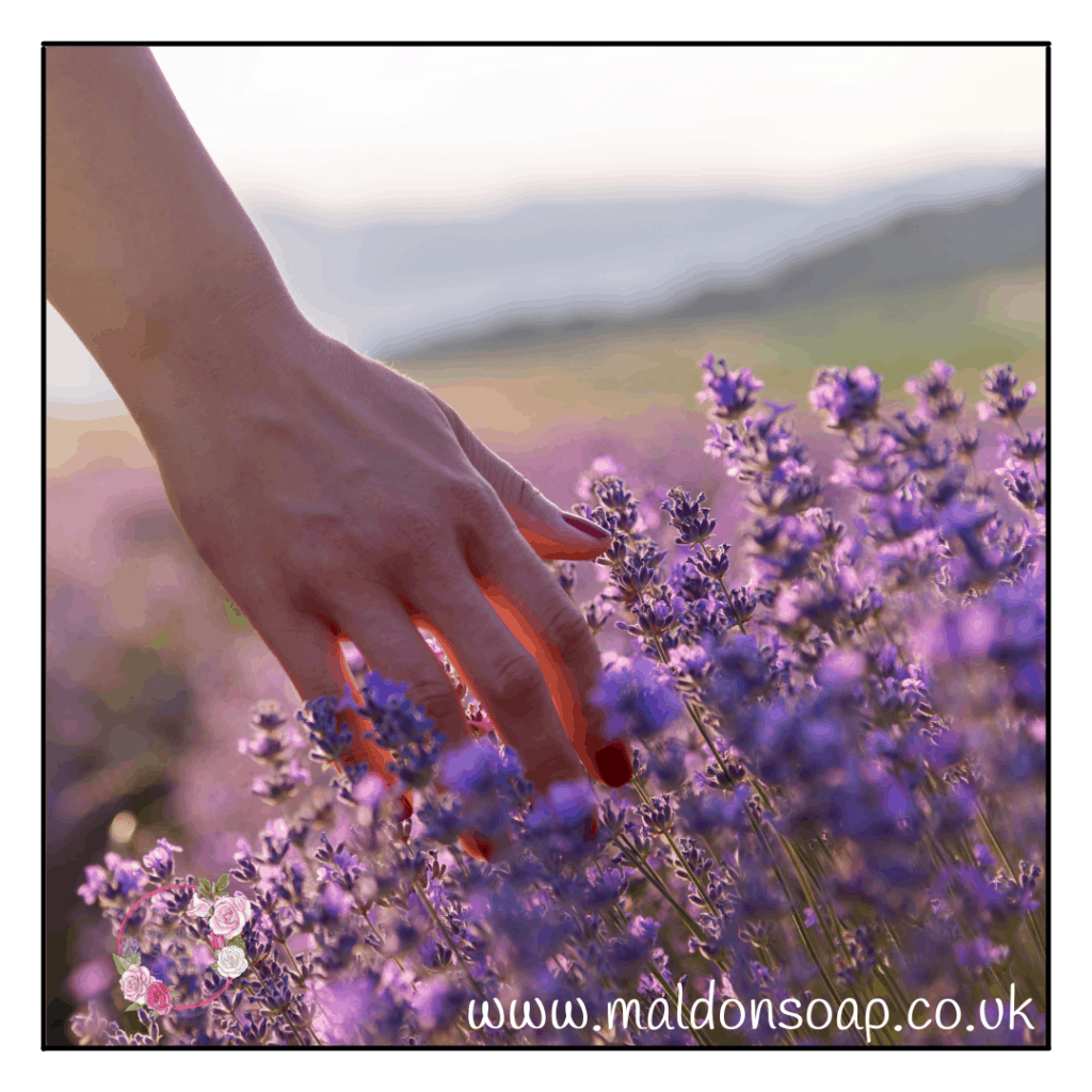 Lavender.  Whether you're a lover or a hater there's no denying its incredible powers for your skin and soul.
