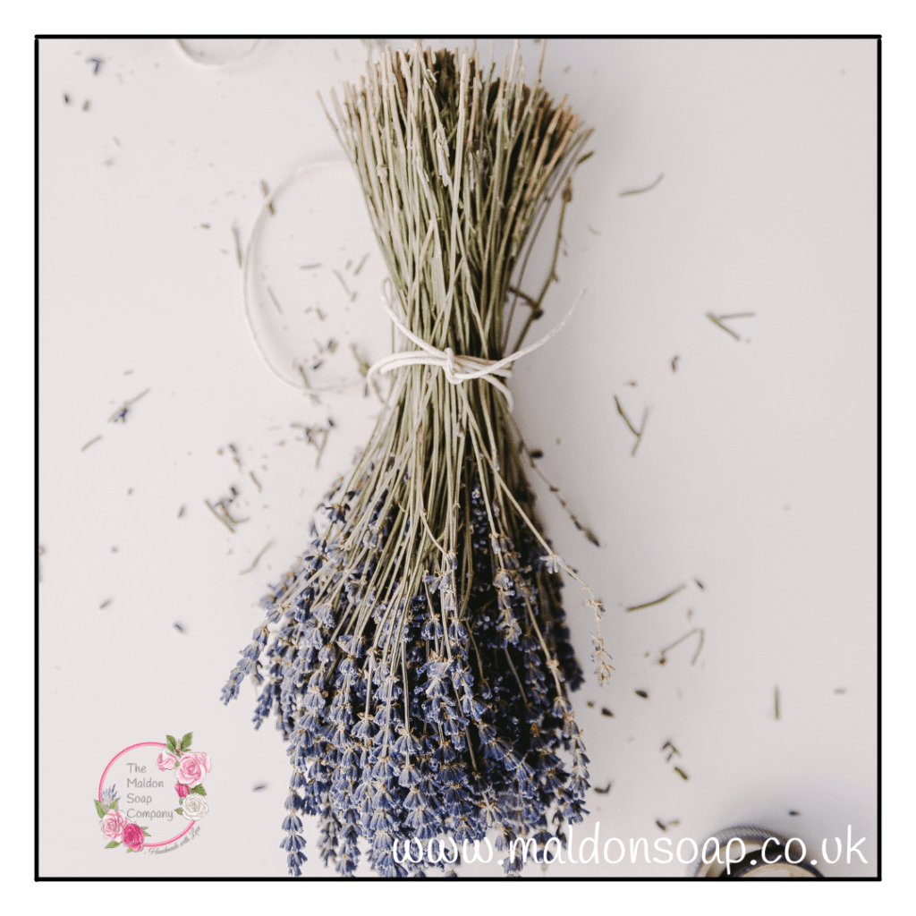 To dry lavender simply pick, tie with string and leave hanging upside down somewhere dark and cool.