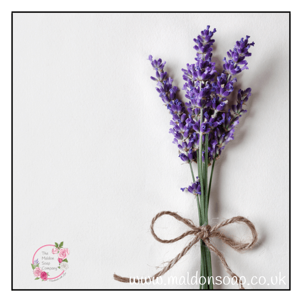 Lavender products available from The Maldon Soap Company