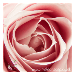 Rose absolute is anti-bacterial, moisturising and calms redness.